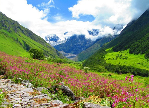 Honeymoon Places In Uttaranchal - Valley of Flowers National Park