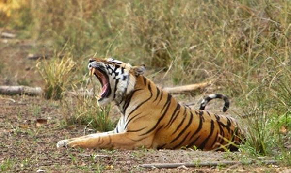 honeymoon-places-in-telangana_kawal-wildlife-sanctuary