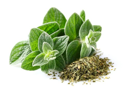 Oregano During Pregnancy
