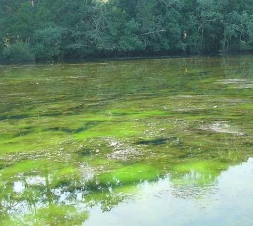 2. The surface water contamination