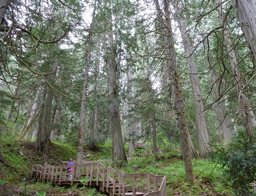 TOP 15 TYPES OF FOREST1
