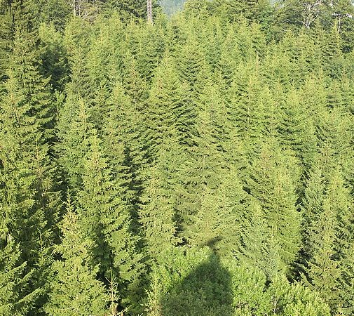 TOP 15 TYPES OF FOREST12