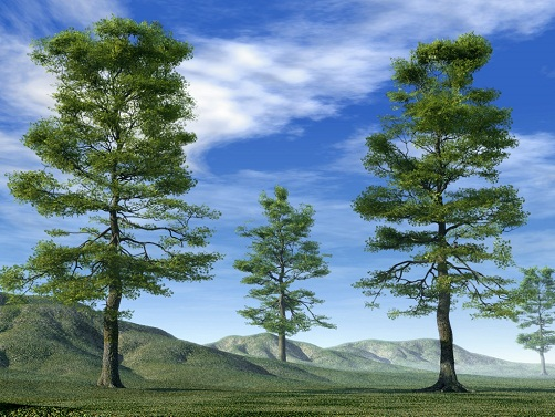 TOP 15 TYPES OF FOREST4