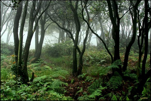 TOP 15 TYPES OF FOREST7