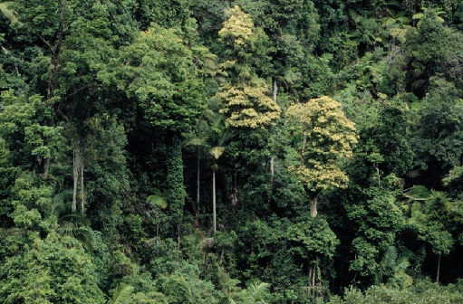 TOP 15 TYPES OF FOREST9