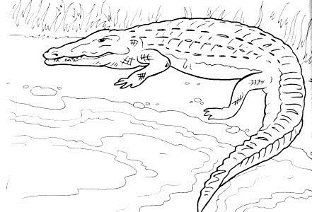 Reptile Animals Coloring Page