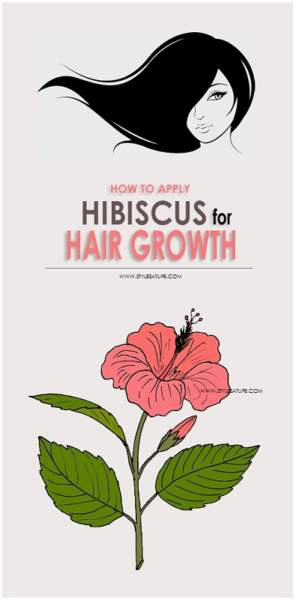 How To Use Hibiscus For Hair Growth Styles At Life