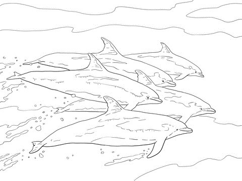 Dolphins Escaping Together