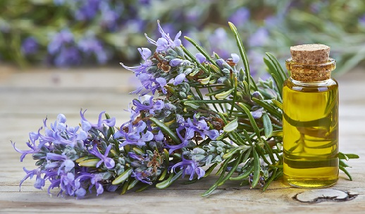 Rosemary oil for Skin Tightening