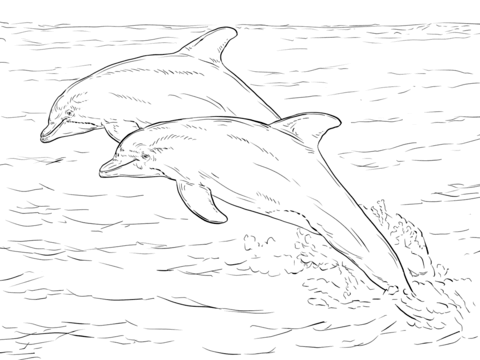 Twinning Dolphin Colouring Page