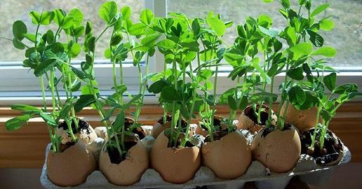 Eggshell Flower Pots