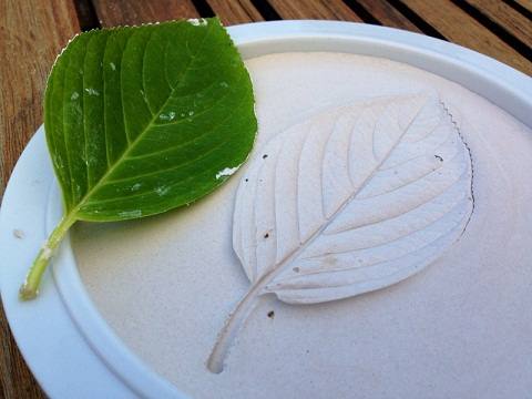Leaf Plaster of Paris Crafts