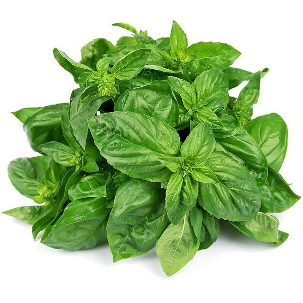 Can Pregnant Women Eat Basil