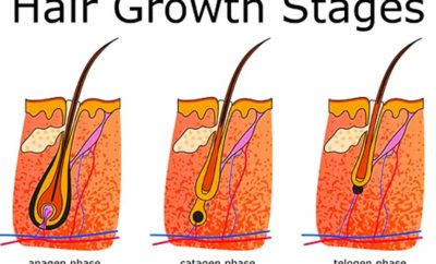 Phases Of Hair Growth Cycle