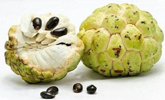 Annona Squamosa For Weight Gain