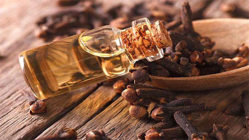 Clove Oil While Pregnant