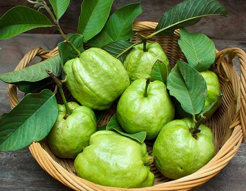 Guava guava leaves face packs