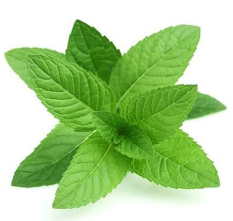 Mint Leaves to Treat Pimples On Chin