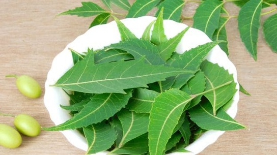 Neem Leaves Ayurvedic Treatment for Pimples
