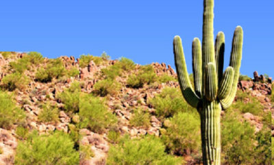saguaro benefits
