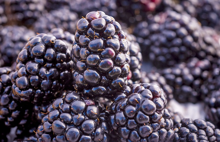 benefits of blackberries for skin, hair and health