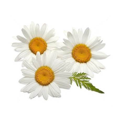 Chamomile home remedies for itching eyes