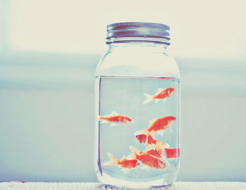 Gold Fish Love Gift