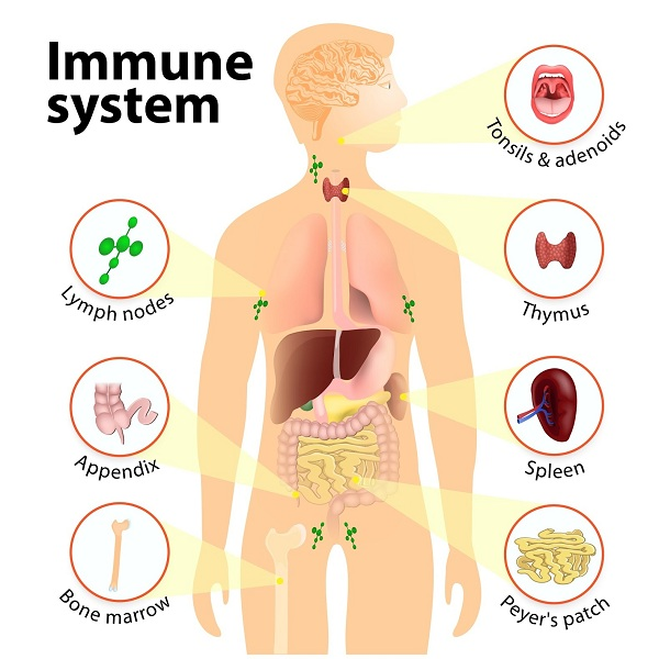 How To Improve Your Immune System