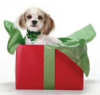 Pets as Gifts