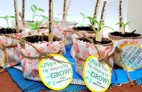 Plant Gift for Teachers Day