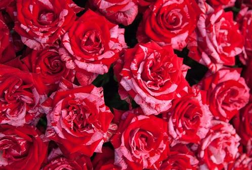 Rose Love Gift
