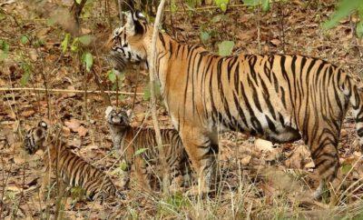 Sanctuaries and Parks in Chhattisgarh