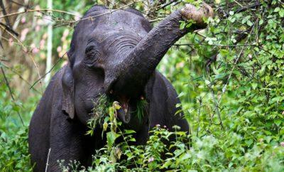 Sanctuaries and Parks in Karnataka