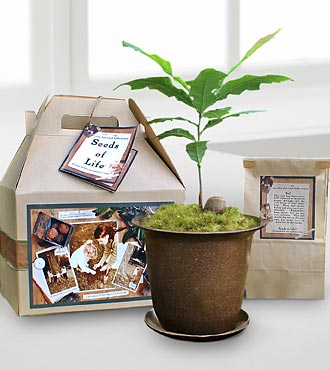 Seeds of Life Sympathy Gifts