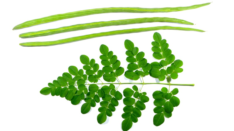 moringa leaves benefits