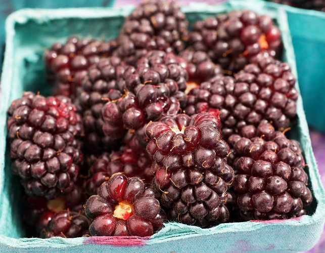 boysenberry benefits