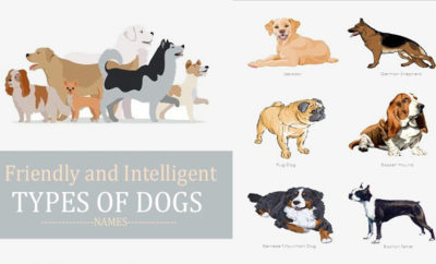Types of Dogs in The World - Names, Pictures, Breeds
