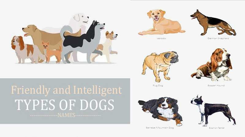 Dog Breeds With Pictures