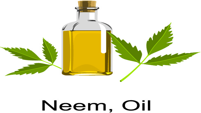 How to Use Neem Oil for Hair