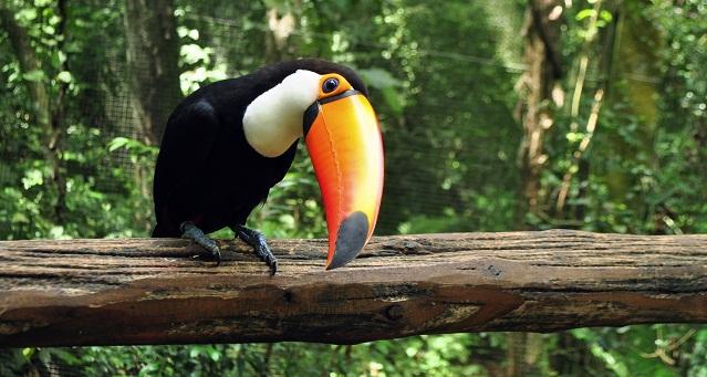 americas favorite birds 40 beautiful birds to color