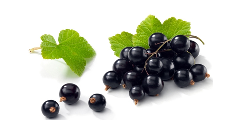 Black Currant Benefits