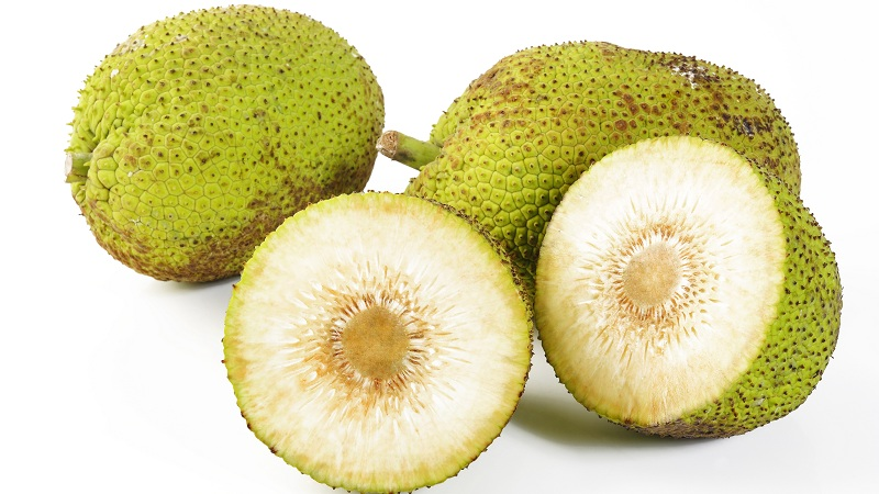 Breadfruit benefits