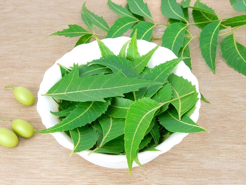 Neem Leaves for Scalp Pimples