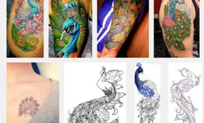 42ce64c9c916c 15 Best Peacock Tattoo Designs And Meanings | Styles At Life