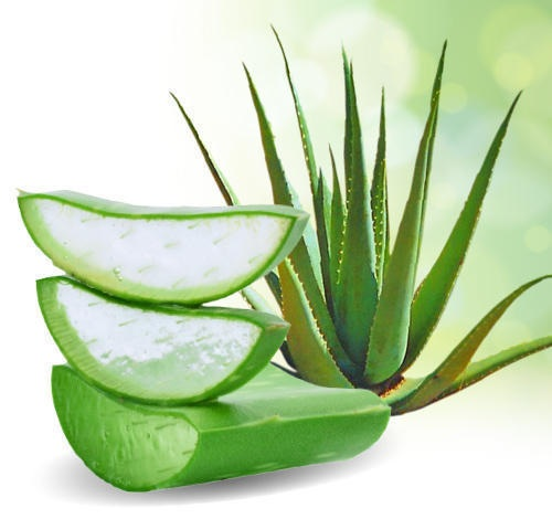 Aloe Vera for Glowing Skin