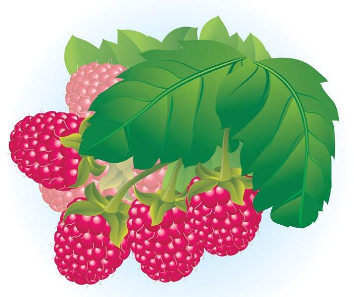 raspberry benefits for hair