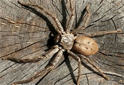 Classifications of spider