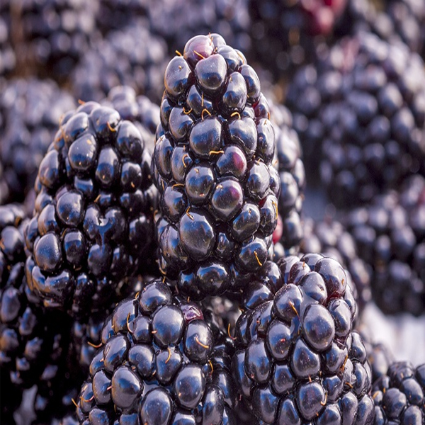 Best Benefits of Blackberries for Skin, Hair and Health
