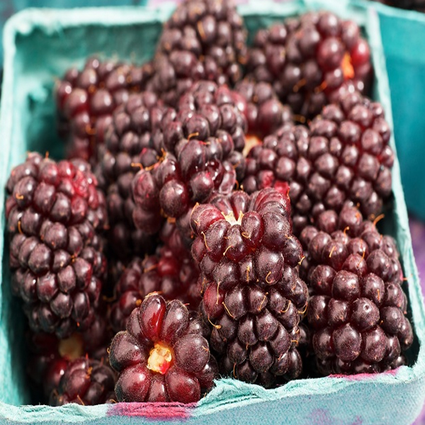 Incredible Boysenberry Benefits & It's Nutrition Facts
