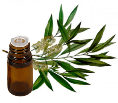 Tea Tree Oil home remedies for lice